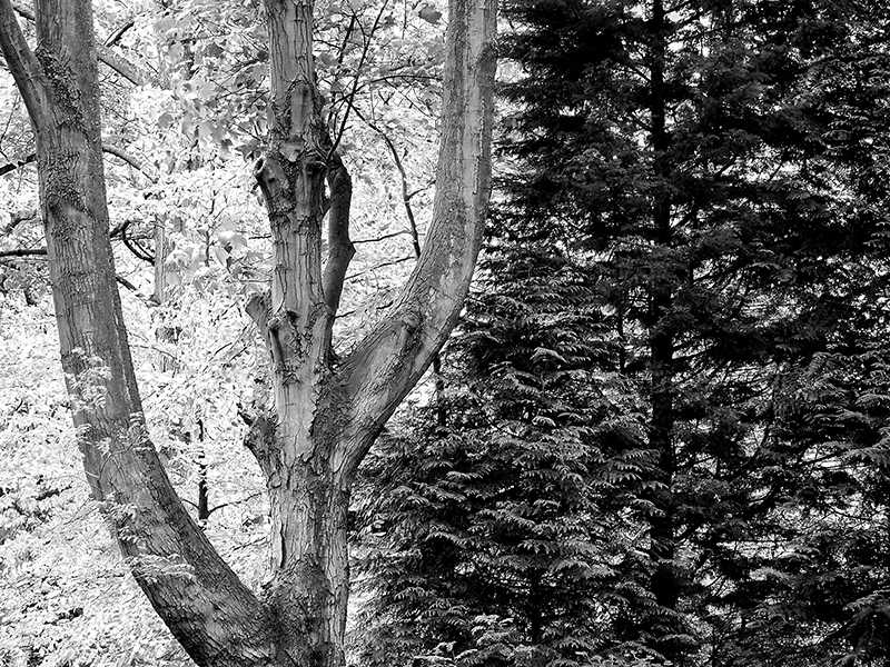 Peter Delehar - Contrasts, Wytham Woods