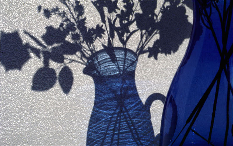 Vase & Shadow by Shelagh Roberts