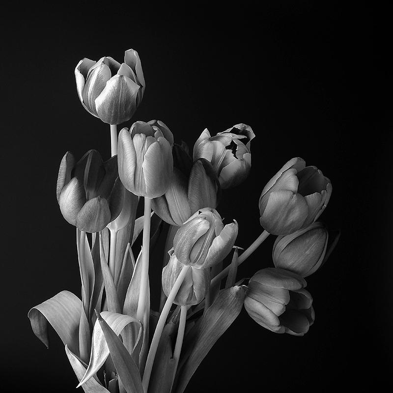 Tulips by Peter Delehar