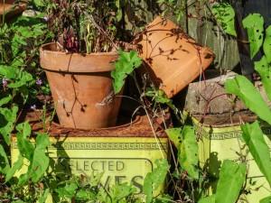 Abandoned Garden - Marilyn Farr