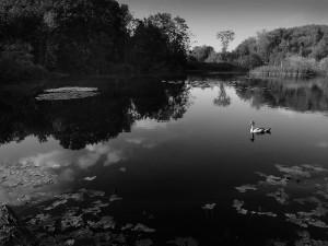 Tranquillity - Peter Delehar