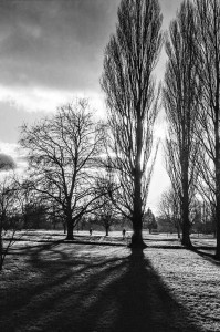 Afternoon sun, Abbey Meadows - Chris Gibbins