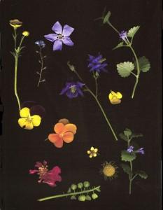 Walk in the Garden - Shelagh Roberts