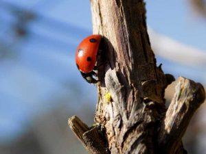 Ladybird - Elizabeth McGinnity