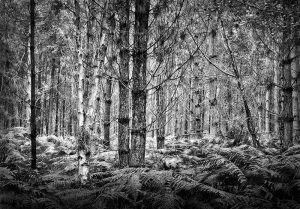 Deep in the Forest - Peter Delehar