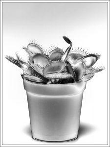 Venus flytrap - Peter Delehar