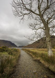 Trees at Crummock Water (Ctre)WEB