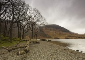 Trees at Crummock Water (Left) WEB