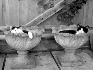 His & Her Pots - Carol Copley