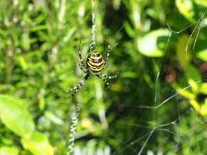The spider at La Conque by Tom Fleming