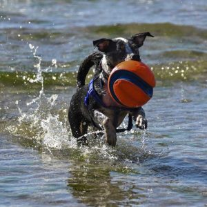 Fetch! - Stuart Carpenter